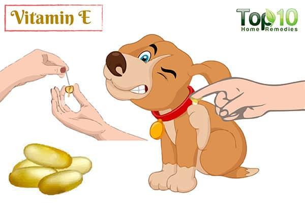vitamin E for dog allergy