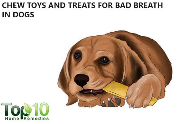 chew toys to reduce bad breath in dogs