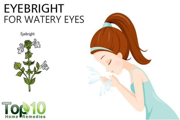 eyebright for watery eyes