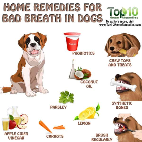 home remedies for bad breath in dogs