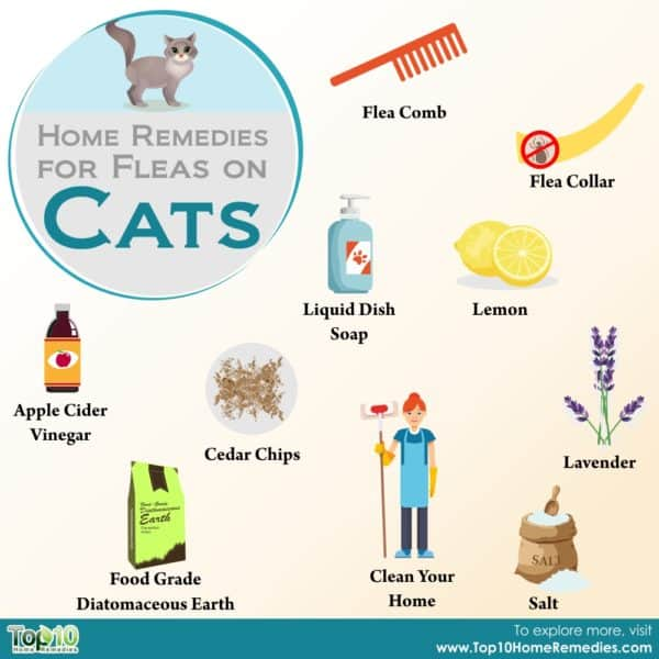 home remedies for fleas on cats