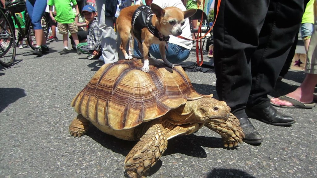 The 42 Cutest Examples of Animals Riding Other Animals