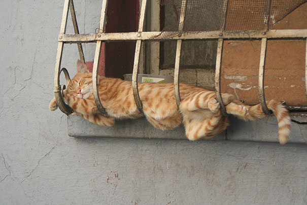 Image result for cats sleeping in strange places