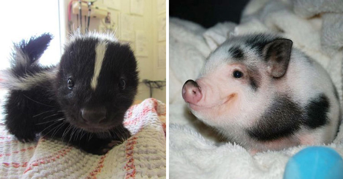 29 Of The Most Adorable Baby Animals  Top13
