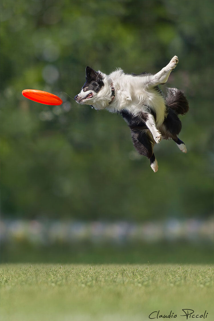 Photographer Captures Dogs In MidAir Jumping To Catch Frisbees  Top13