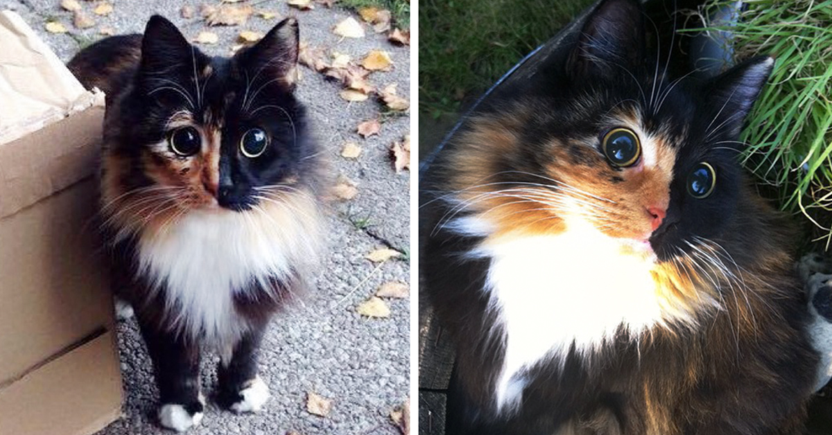 Cute And Funny Cat Wallpaper Blind Cat Rescued From The Streets Has Incredibly