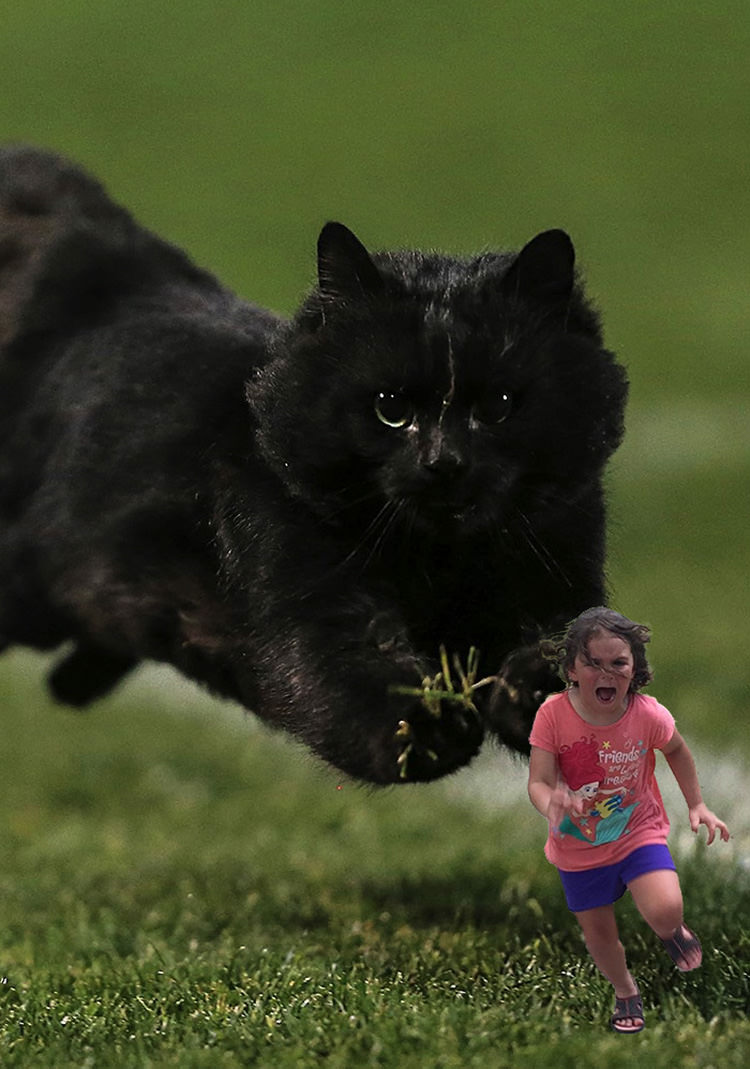 The Internet Goes Crazy After This Cat Interrupted a Rugby Game  Top13
