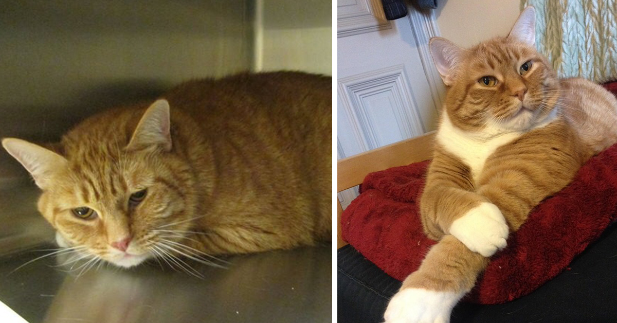 Woman Takes Sad Shelter Cat And Turns His Frown Into A Smile  Top13