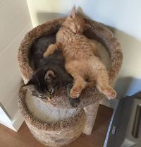 These Cats Wont Stop Sleeping Together Even After ...