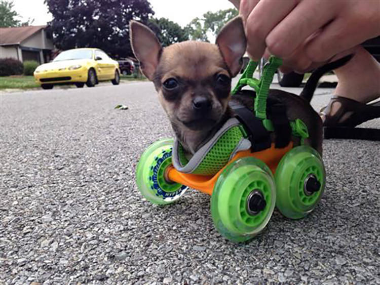 15 Awesome Things Dog Owners Did That Made Their Dogs