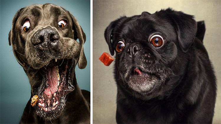 The Funny Faces Of Dogs Trying To Catch Treats  Top13