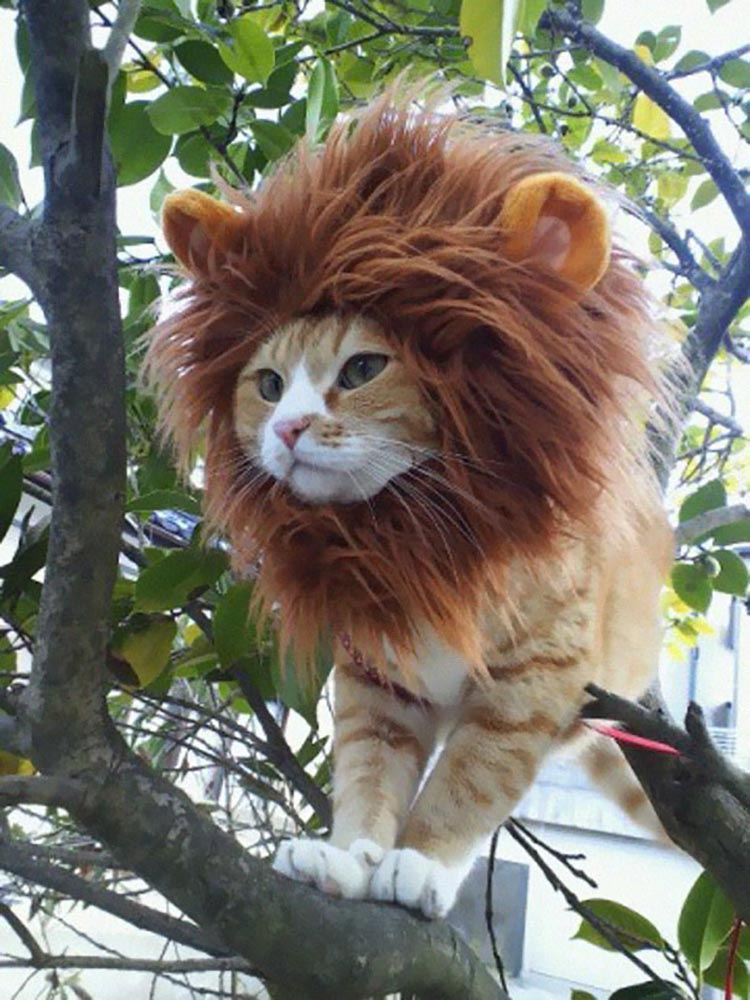 18 Of The Cutest Most Terrifying Cat Costumes For
