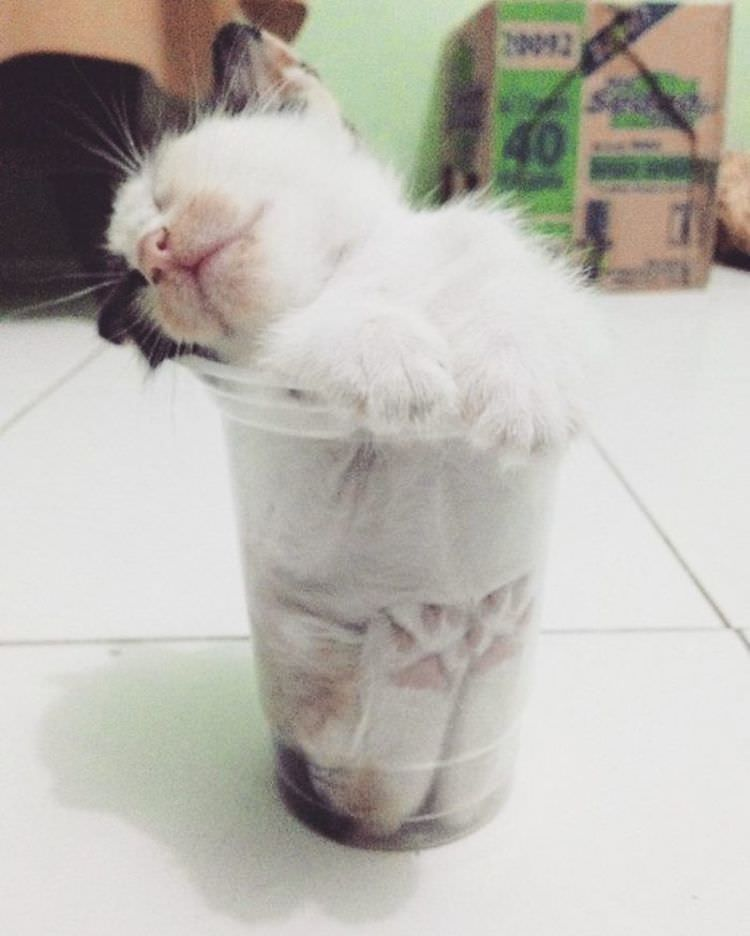 18 Funny Pictures That Show Cats Are Liquid Top13