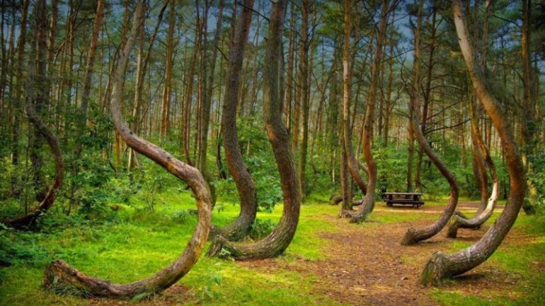 Image result for Hoia Forest – Romania
