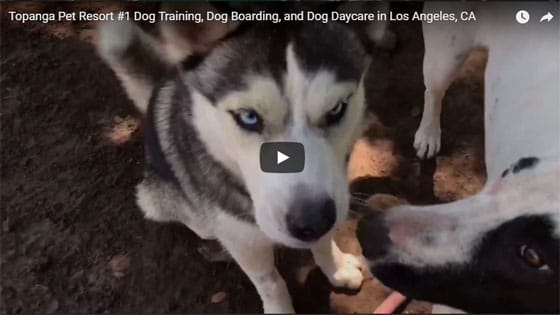Topanga Pet Resort© - LA's Premier Dog Training & Dog