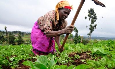 wala digital banking is good for african wowan farm