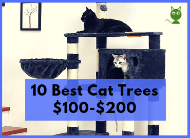 10 Best Cat Trees $100-$200 - Feature Image (Canva)