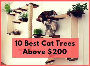 10 Best Cat Trees Above $200