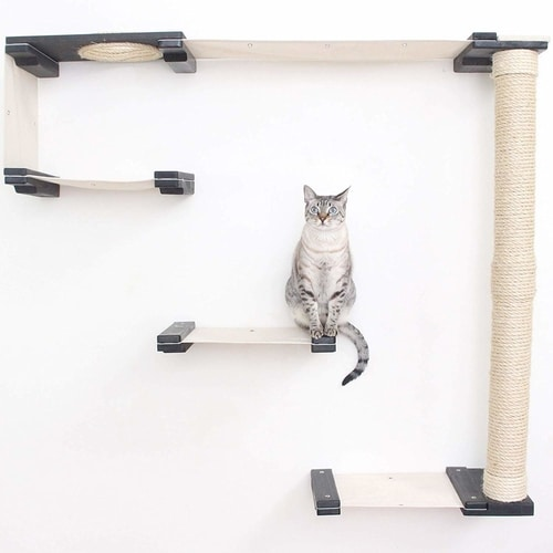 Best Cat Trees Above $200 - CatastrophiCreations Cat Mod Climbing Track