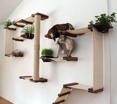 Best Cat Trees Above $200 - CatastrophiCreations Cat Mod Garden Complex Wall Tree