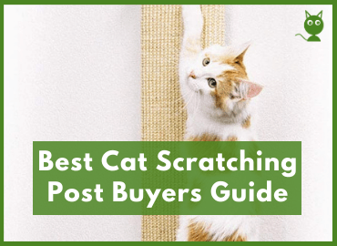 Best Cat Scratching Post Page Image (Canva)
