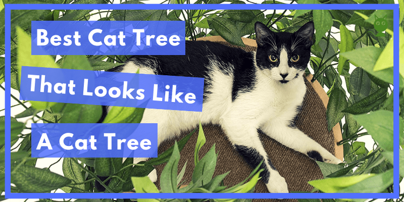 Best Cat Tree That Looks Like A Cat Tree Buyers Guide