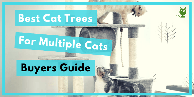 Best Cat Trees For Multiple Cats Post Post Image