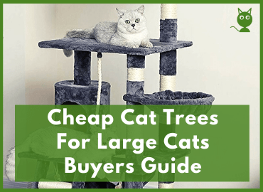 Cheap Cat Trees For Large Cats Page Image
