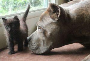 Polk County Tn Animal Shelter   Top Dog Information