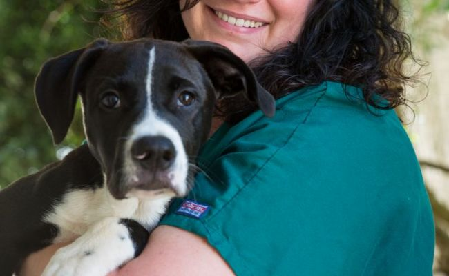 Raleigh Animal Shelter Top Dog Information