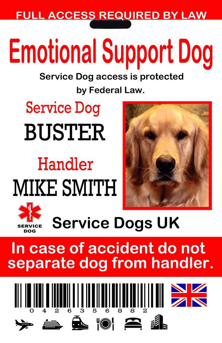 Service Dog Emotional Support | Top Dog Information
