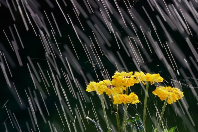 23 Amazing Rain Photography