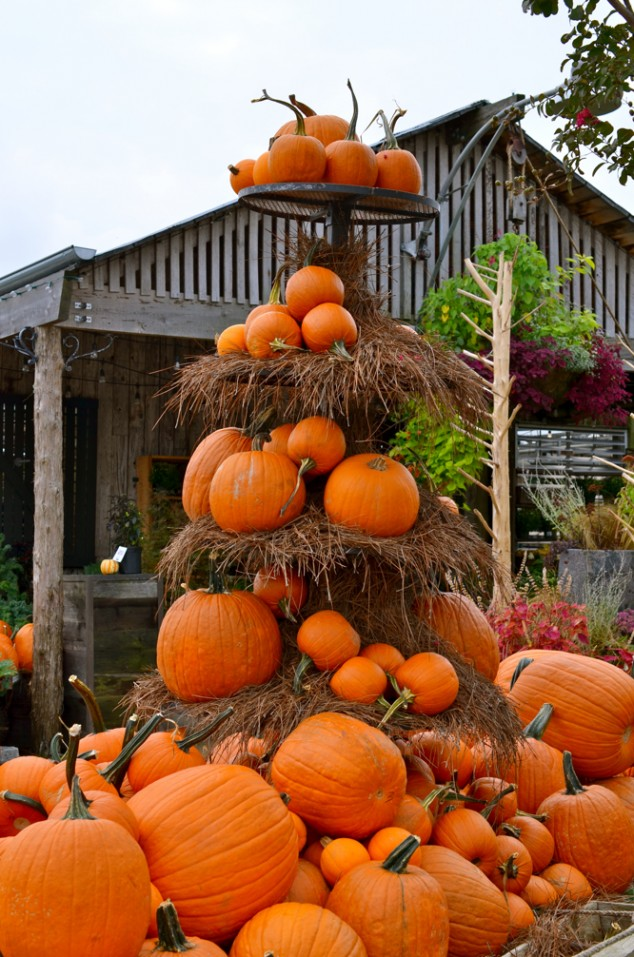 Fall Scenes Wallpaper With Pumpkins Impressive Autumn Garden Decor Ideas