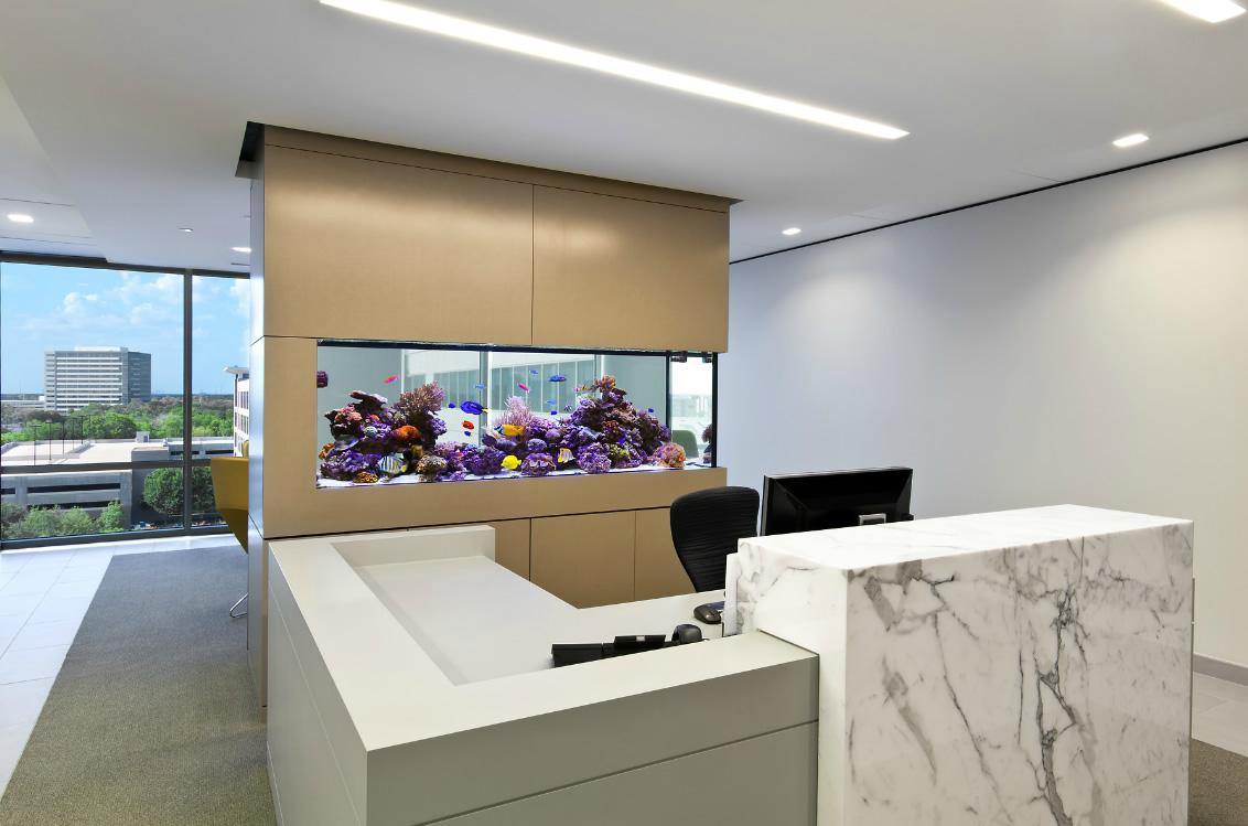 Inspiring Aquarium Office Designs That Will Catch Your Eye