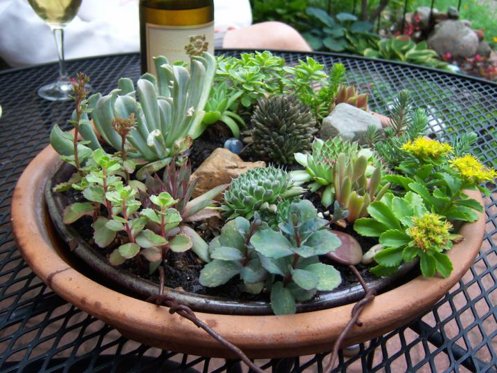 17 Unique Succulent Planters That Can Make A Statement
