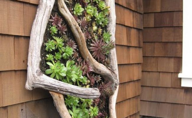 Absolutely Awesome Driftwood Planters That Will Amaze You