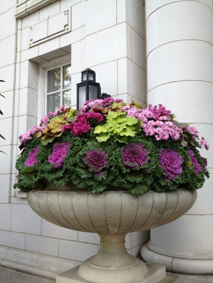 Impressive Ornamental Cabbage Decorations To Beautify Your