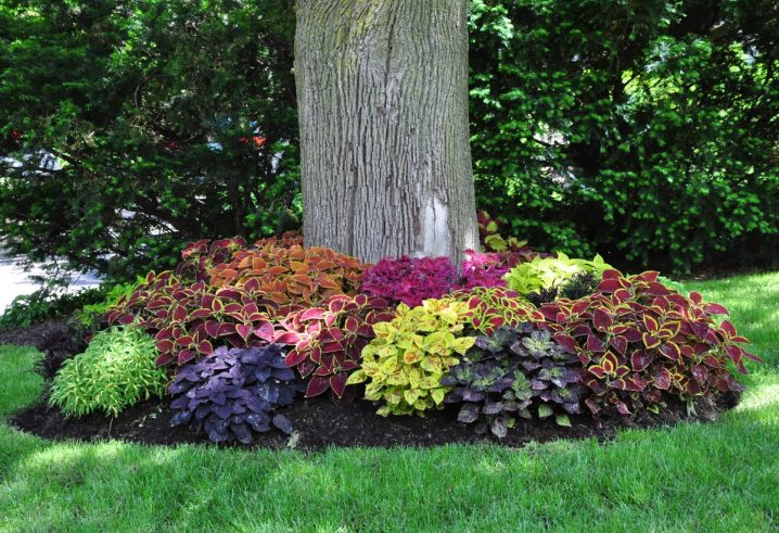 Landscaping Around Trees Ideas You Should Not Miss!