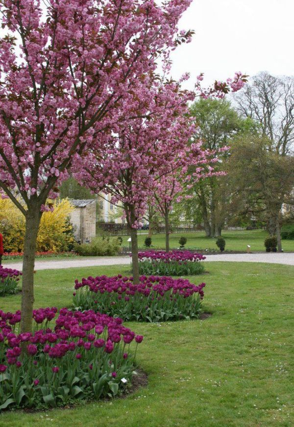 mesmerizing tulip flower beds