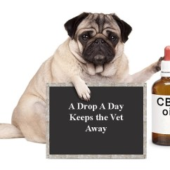 Diy Living Room Chairs That Swivel The Benefits Of Cbd Oil For Dogs