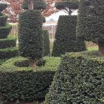 Topiary And Hedging Co Topiary
