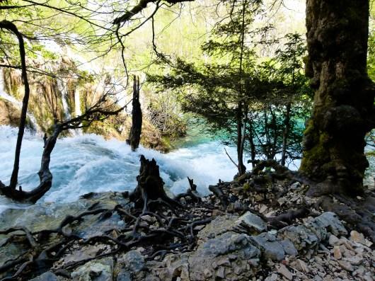River's wood © Sandy