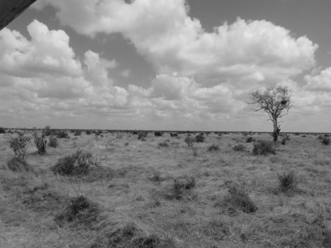 Cliché de Tsavo © Topich
