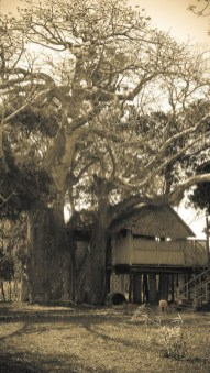 Kinondo Khaya II © Topich