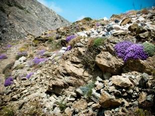 Estompes violettes de l'ancienne Thera
