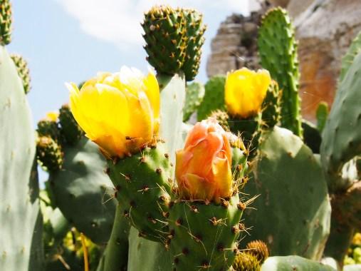 Floraison piquante