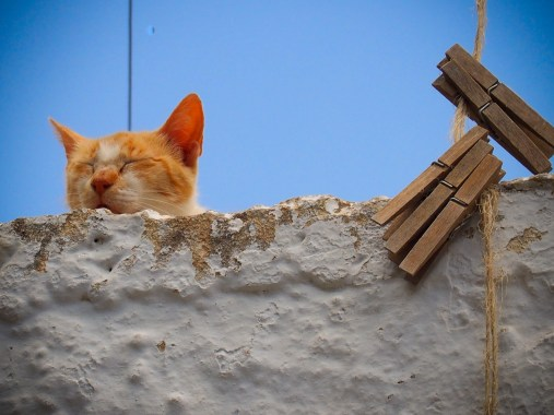 Cat Land
