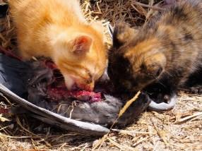 Des chatons affamés