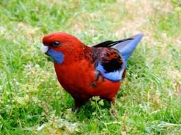 Pigeon flashy © Yopich