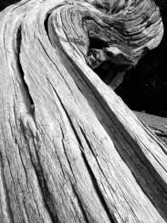 Old Lady © Yopich
